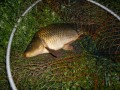 одесса рыбалка дашкины пруды